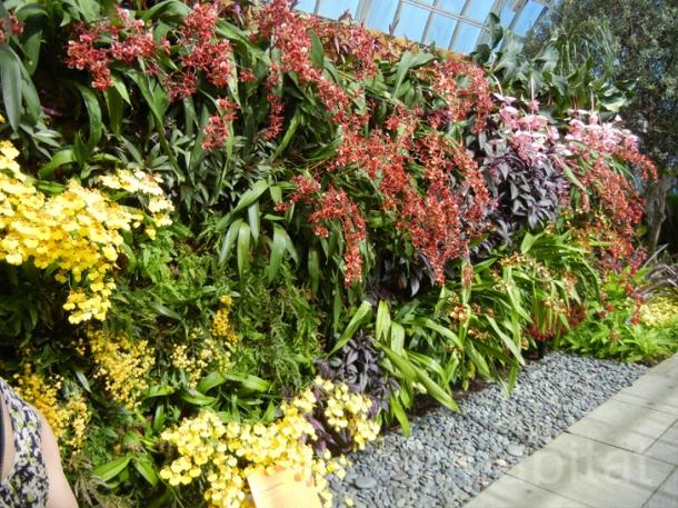 flores jardim vertical:Jardim Vertical