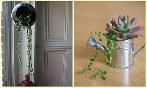 Plantas Ideais para Ter Dentro de Casa (4)